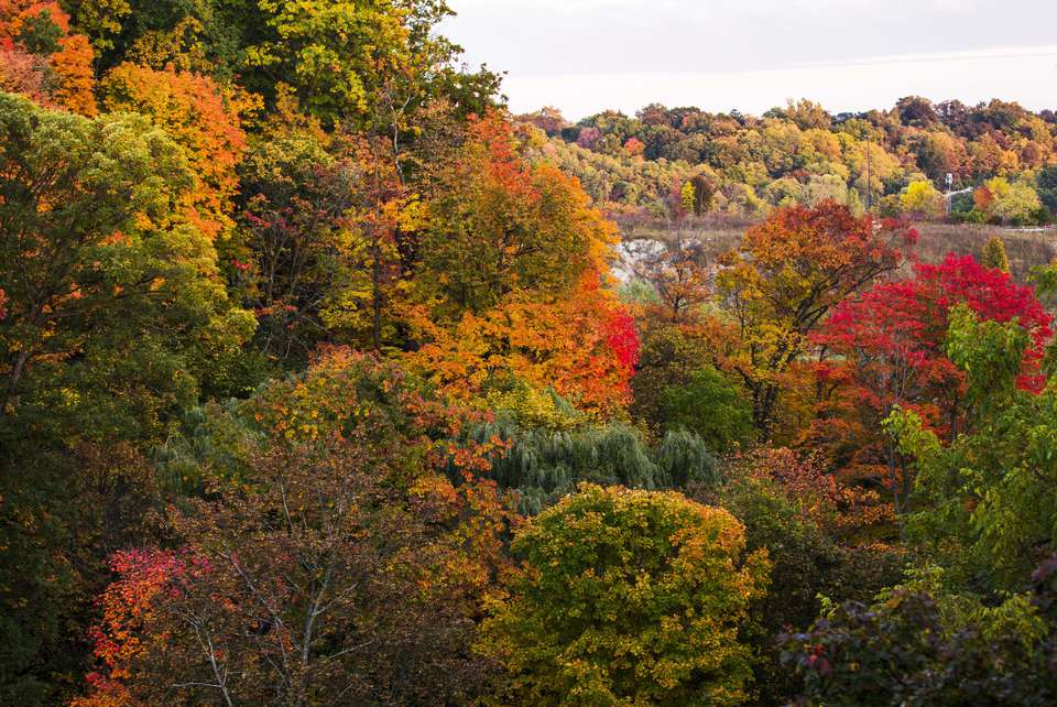 Fall foliage in Don Valley in Toronto