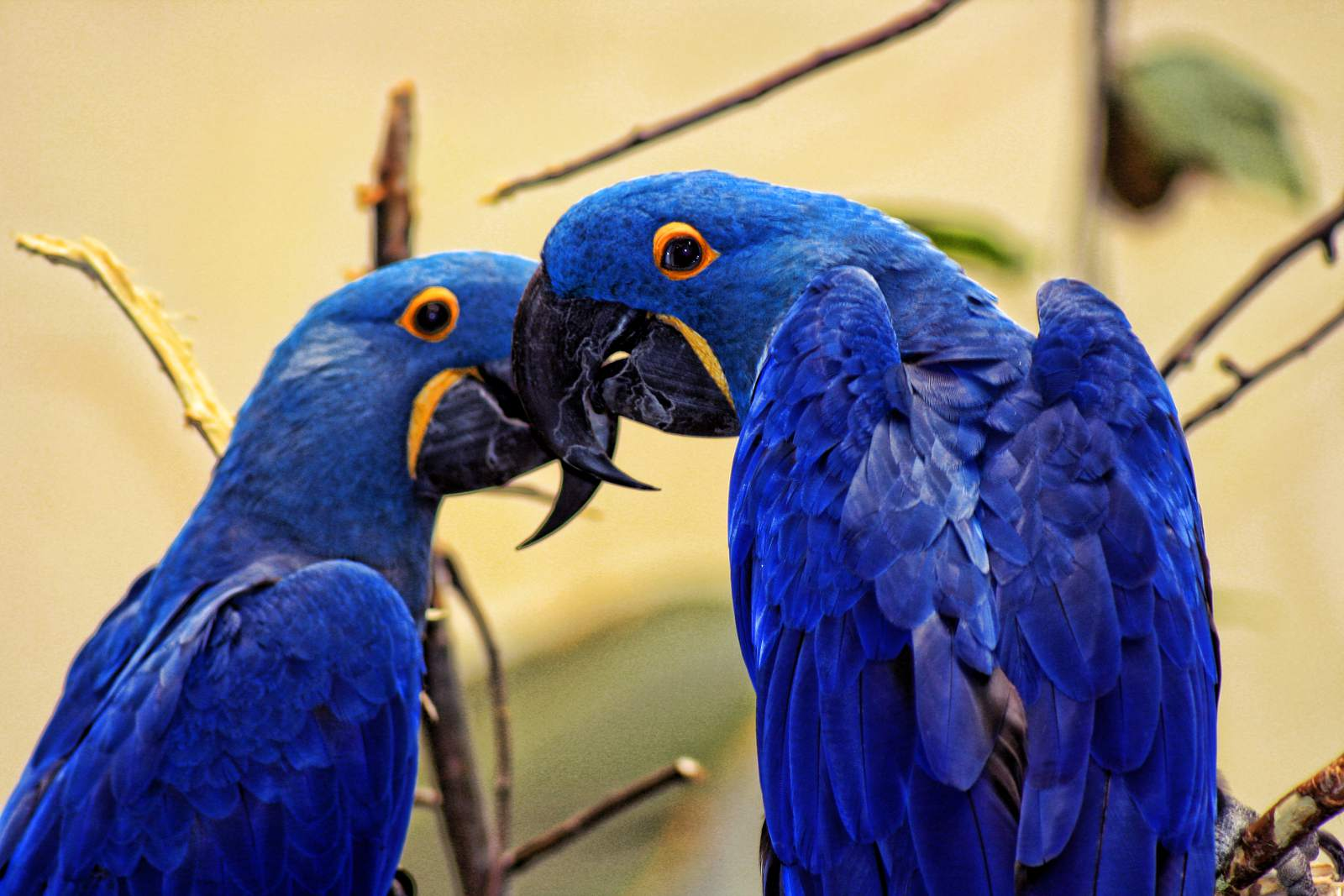 Parrots at the Biodome