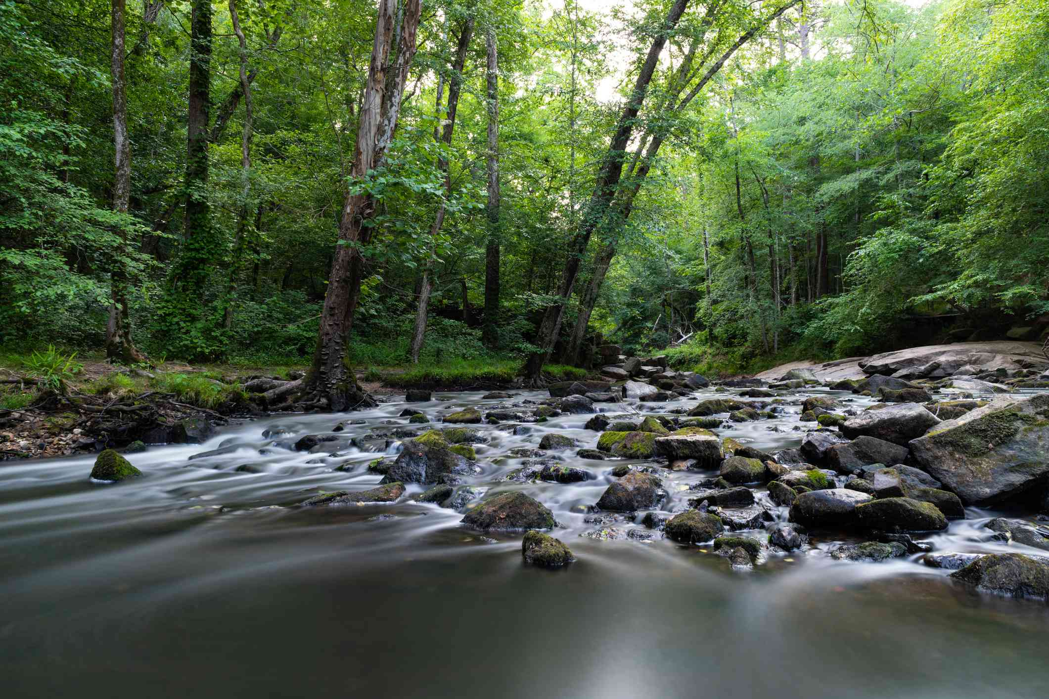 Umstead State Park in Raleigh, North Carolina