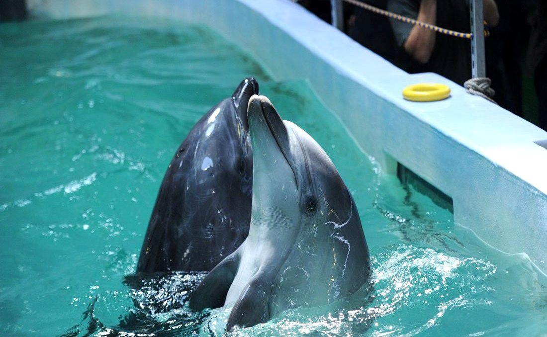 Vladivostok Dolphins