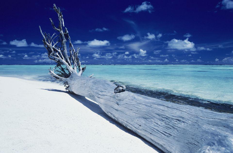 Polinesia Francesa, Tetiaroa (Isla de Marlon Brando), Driftwood en la playa de arena blanca.