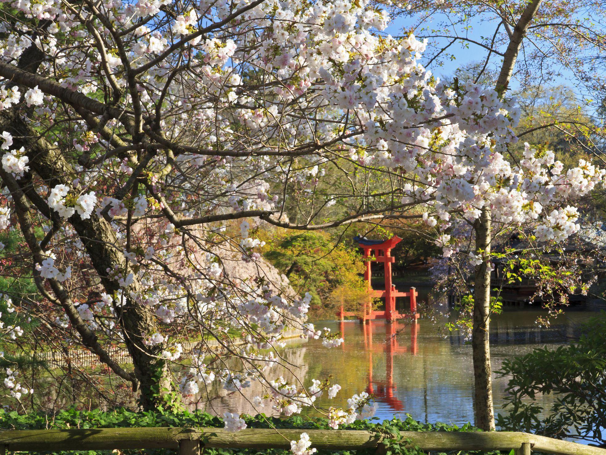 Brooklyn Botanic Garden Visitors Guide