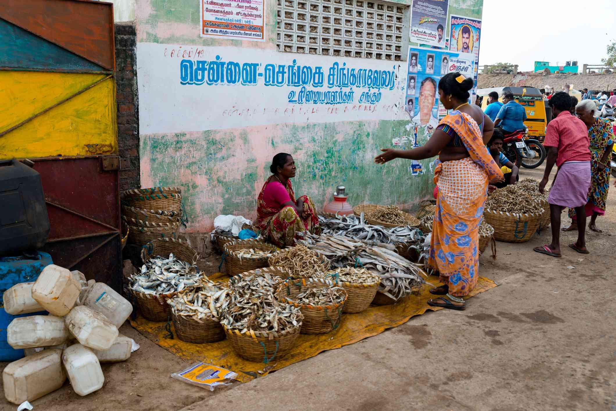 Kasimedu Fishing Harbour, Chennai