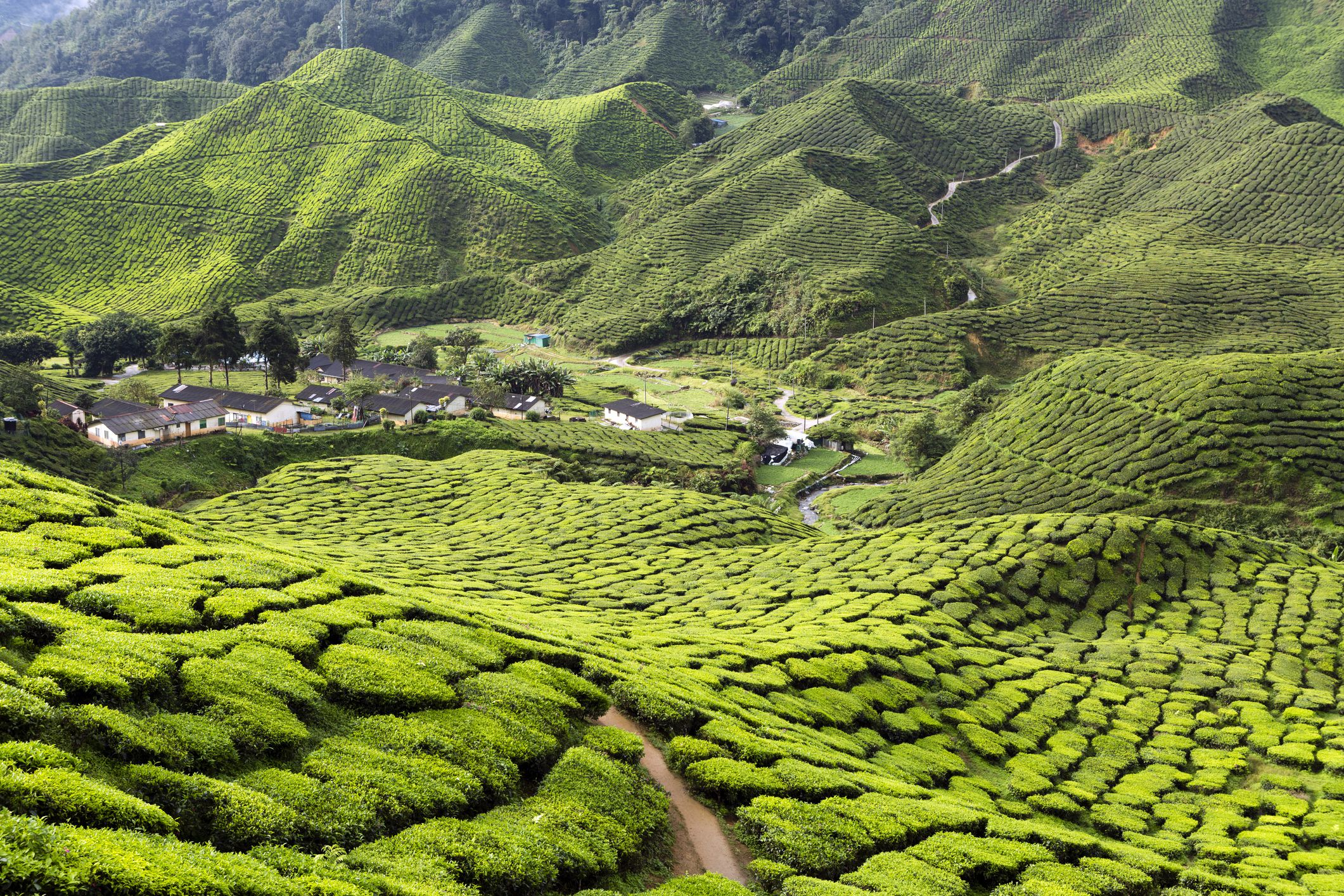 Cameron Highlands Travel Guide: A list of the best travel ...