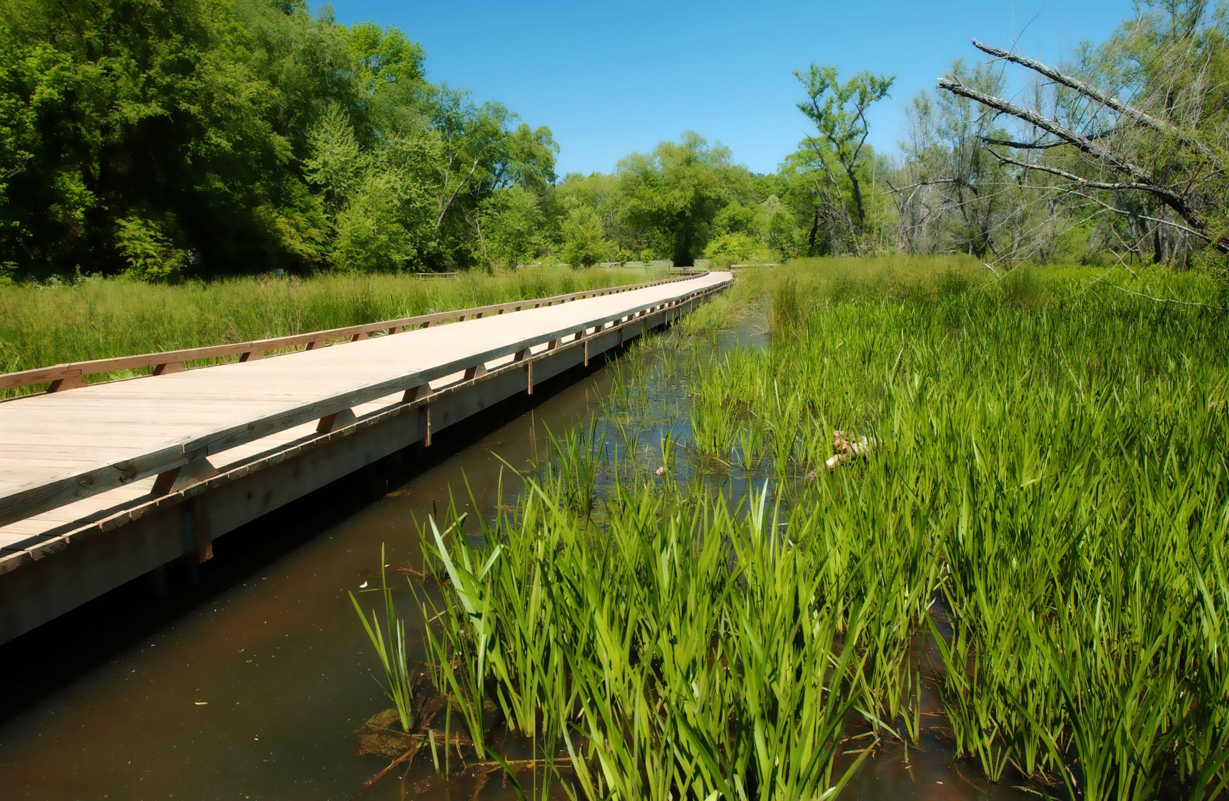 Ivy Creek Greenway Trail at George Pierce Park