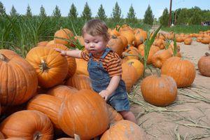 Picking a pumpkin at Schnepf Farms, Queen Creek, AZ