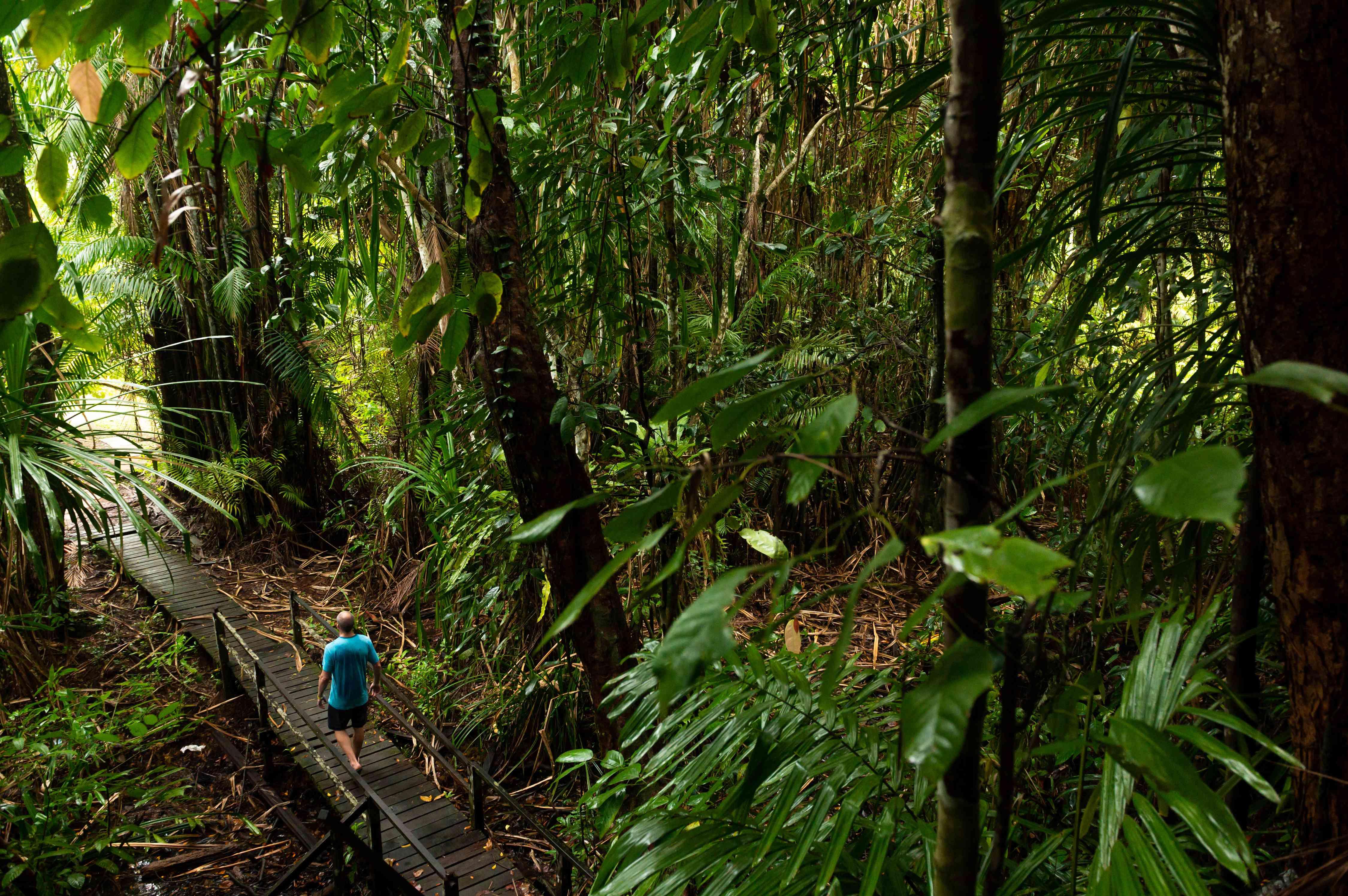 Man hiking in a Borneo rainforest