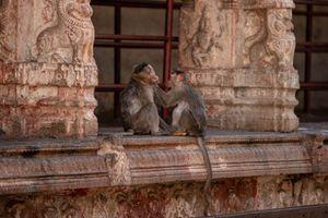 Monkeys at Hampi Ruins