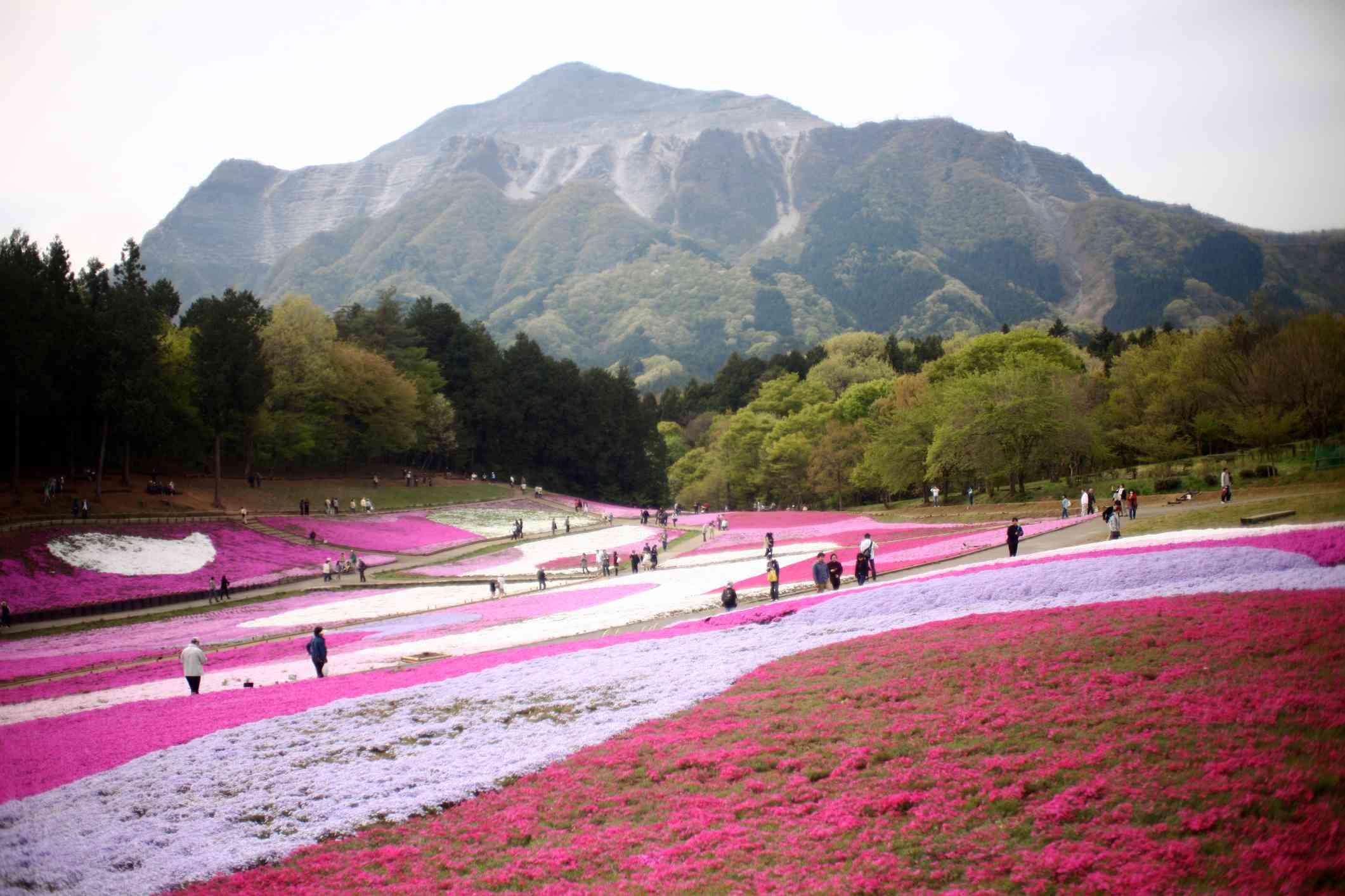 Japanese flower carpet park