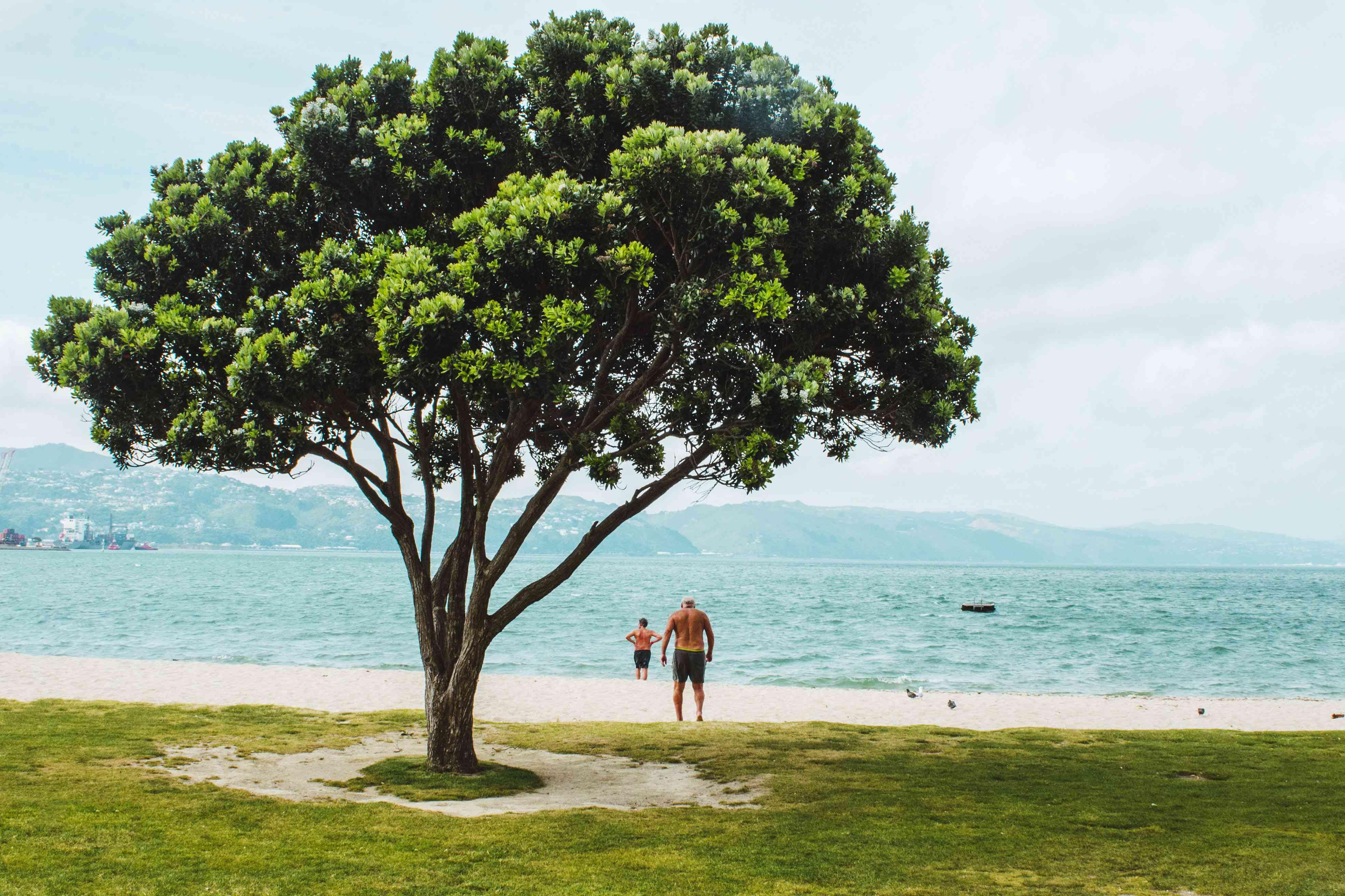Two gente en la arena debajo de un árbol en la Bahía Oriental
