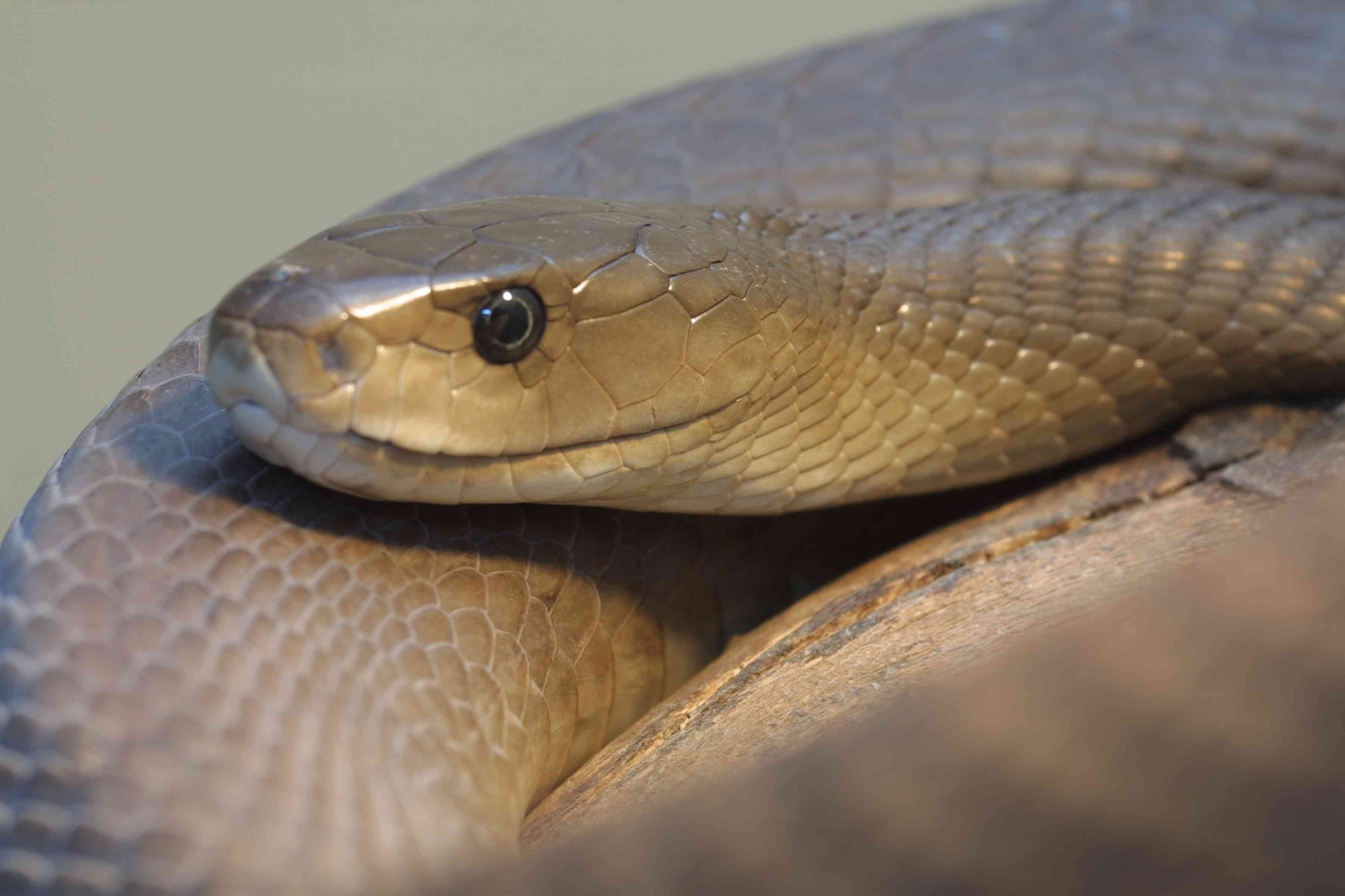 A Top 10 List of Africa's Most Dangerous Snakes