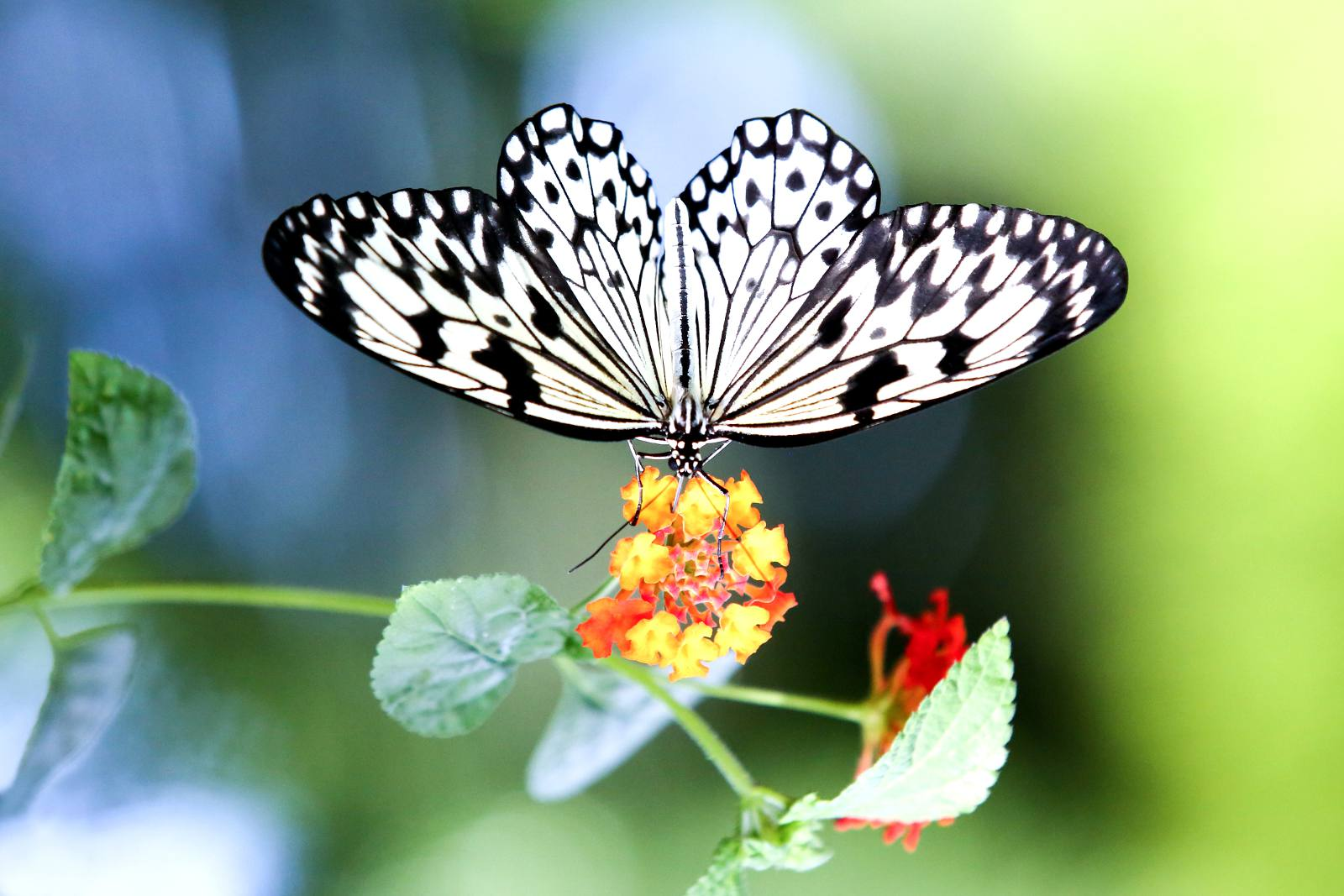 Montreal festivals in March 2017 include the Botanical Garden's Butterflies Go Free.