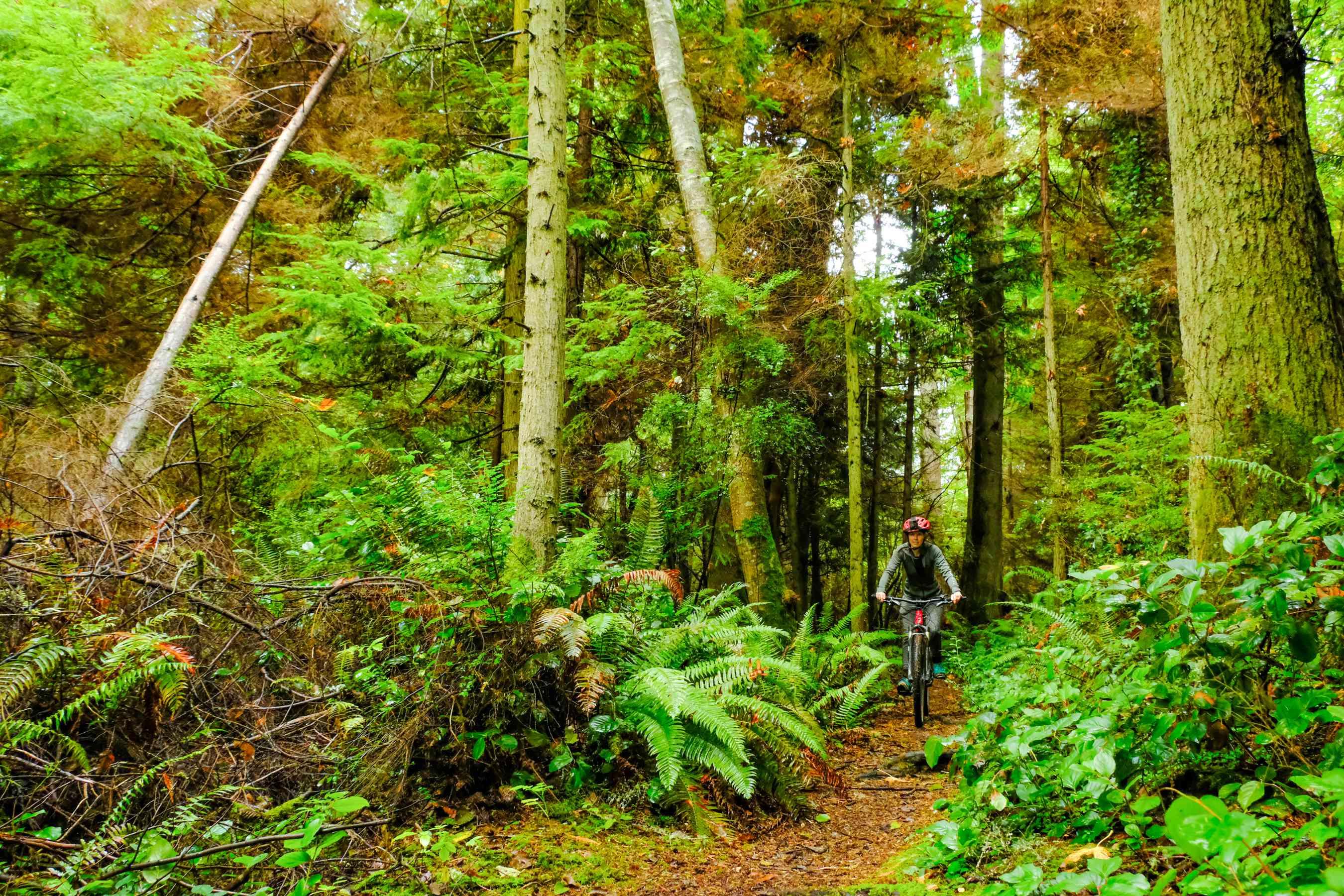 A person biking through the forest on Bainbridge Island