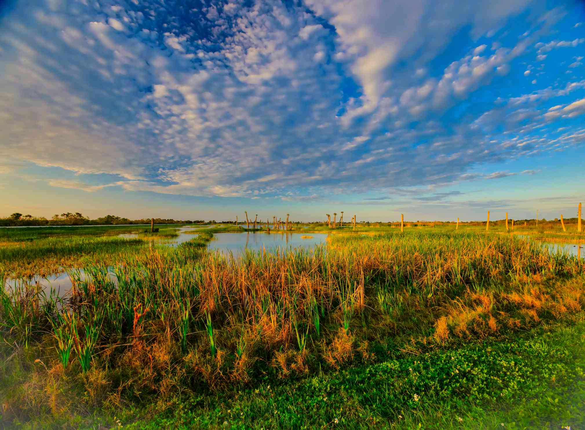 Soft light and fair clouds over the Viera Wetlands near sunset.