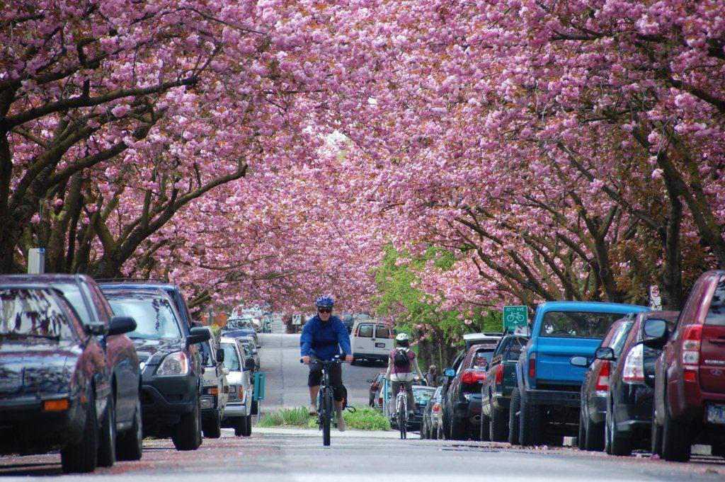 cherry_festival_bike.jpg