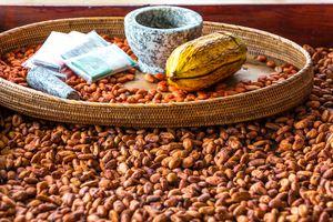 Cocoa Beans in Bin