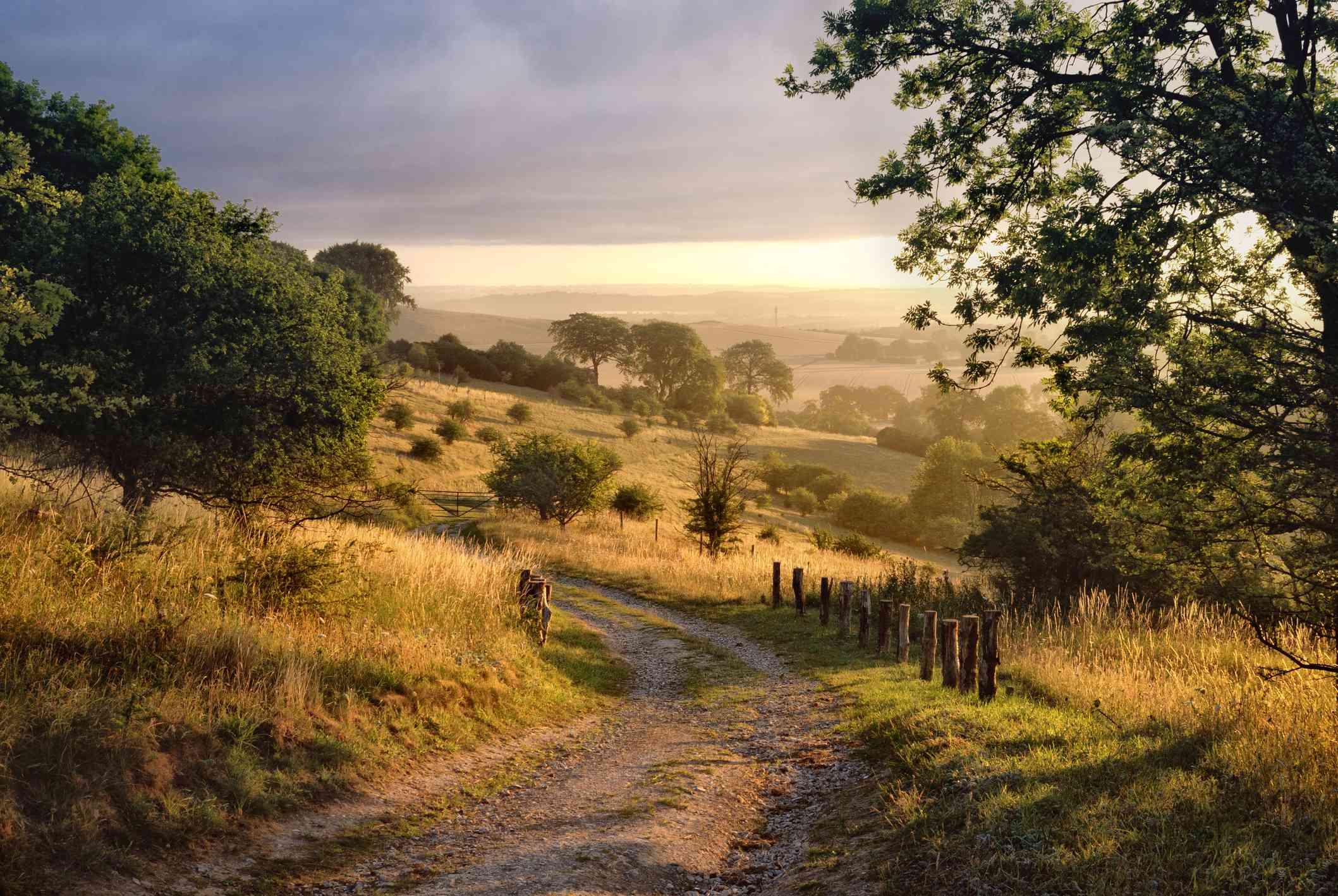 Dawn sunshine in English countryside.