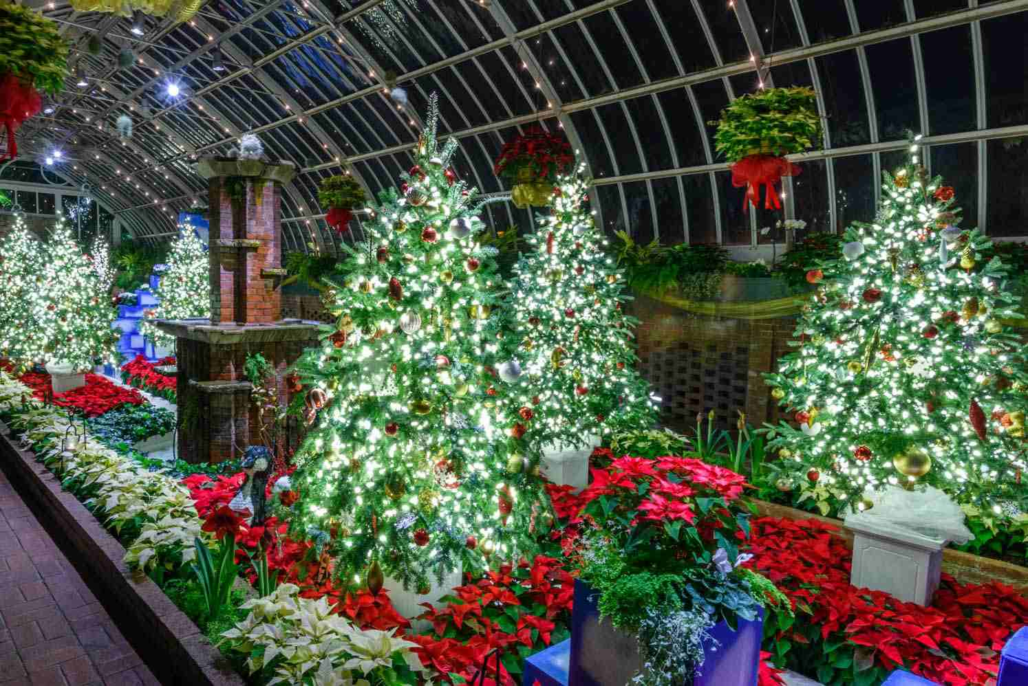 Christmas trees at the Phipps Conservatory and Botanical Gardens