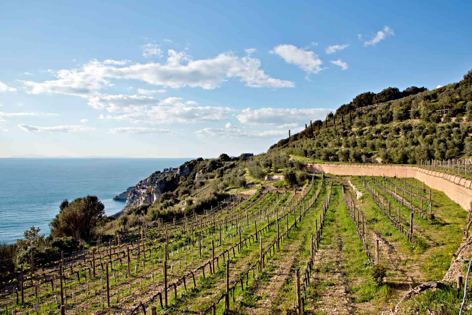 Capo d'Uomo vineyard and the Tyrrhenian Sea