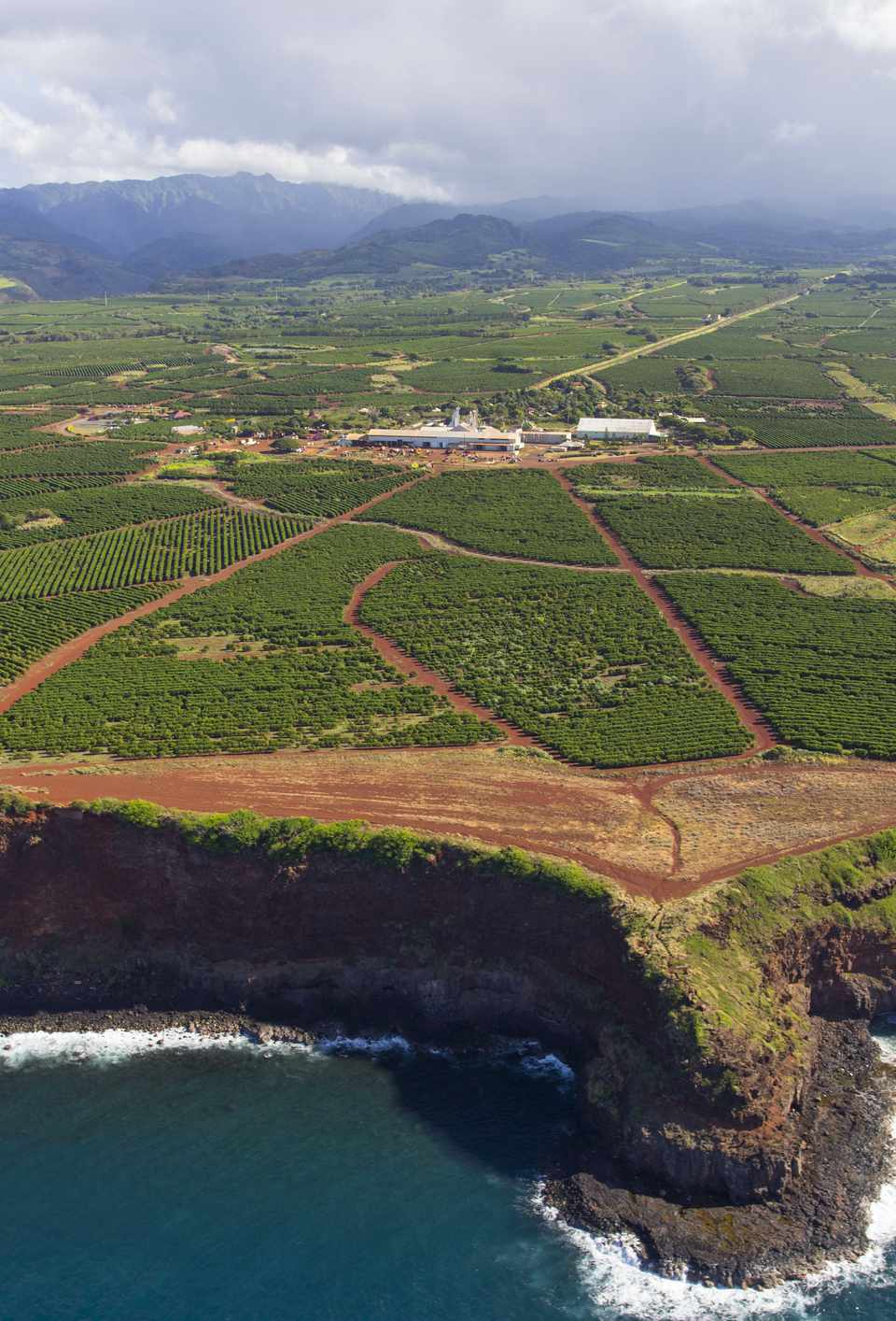Aerial view of coastal cliffs and a coffee plantation on the island of Kauai, Hawaii