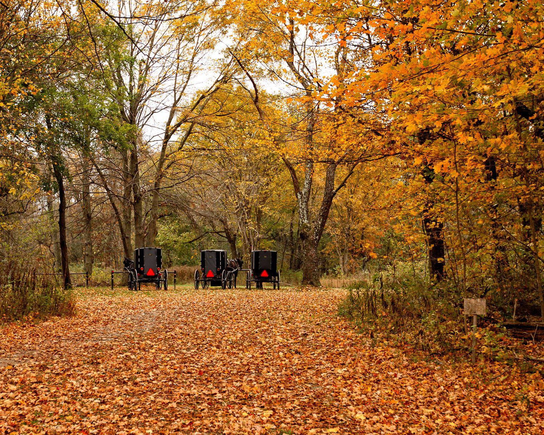 Amish Buggies in the Fall