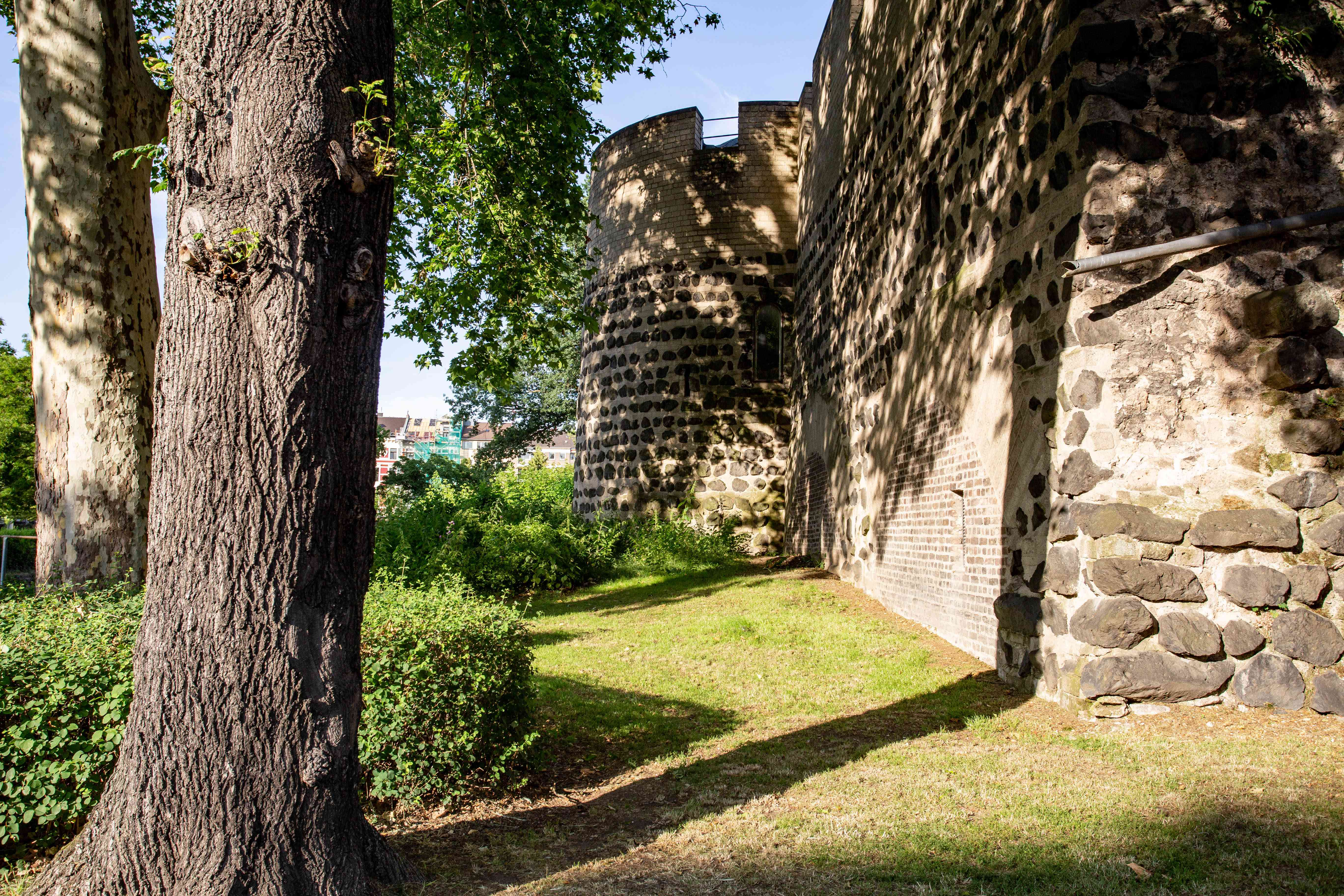 The medieval walls in cologne with trees growing beside it