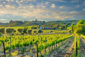California spring vineyard in the Temecula Valley, CA