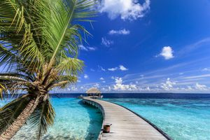 Palm tree and turquoise sea in the Maldives