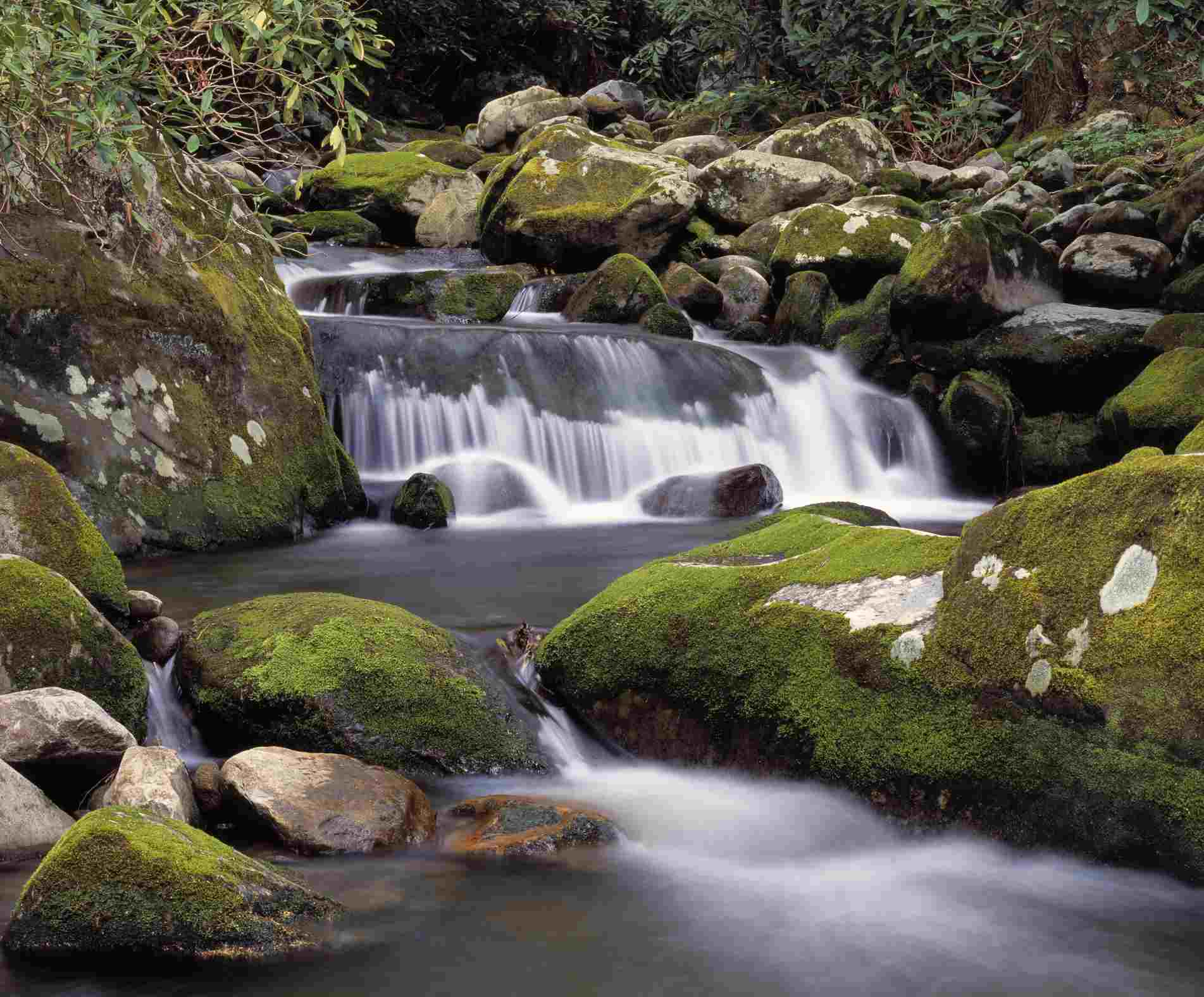 The Roaring Fork River rushes through forest over moss covered rocks
