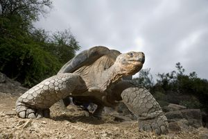 Galapagos Island tours require planning for budget travelers.