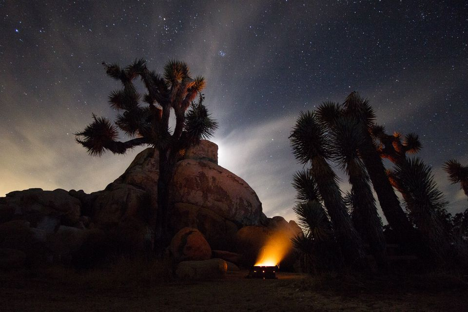 A campfire giving light to nearby cacti and a star filled sky in Joshua Tree
