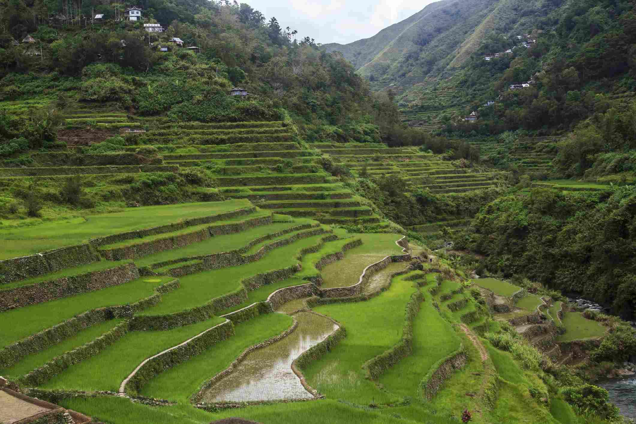 Rice terraces in Banaue, Philippines