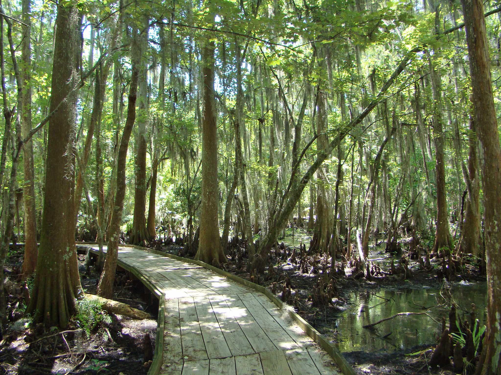 Visite una reserva natural en Nueva Orleans