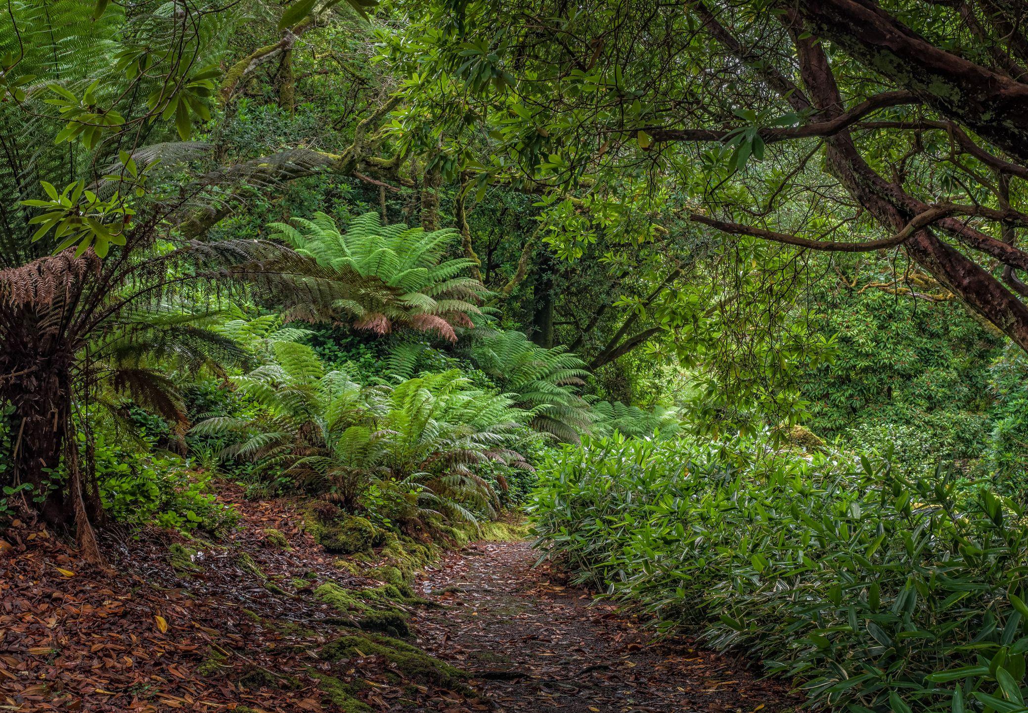 Derreen Garden Ireland