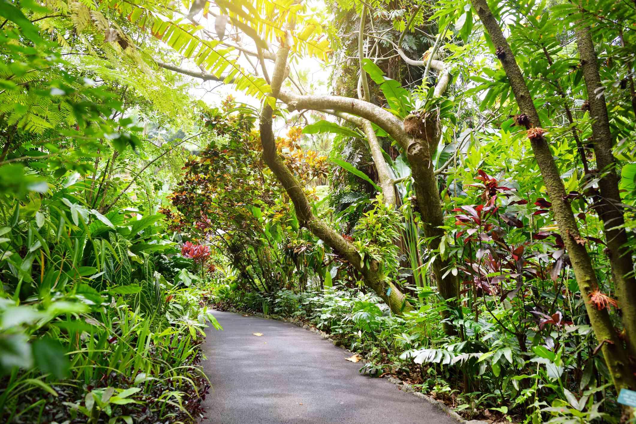 Hawaii Tropical Botanical Gardens on Big Island of Hawaii