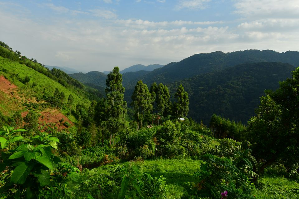 Steep cultivated slopes in front of the rainforest of Bwindi Impenetrable National Park