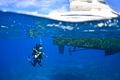 scuba diving in Turks & Caicos