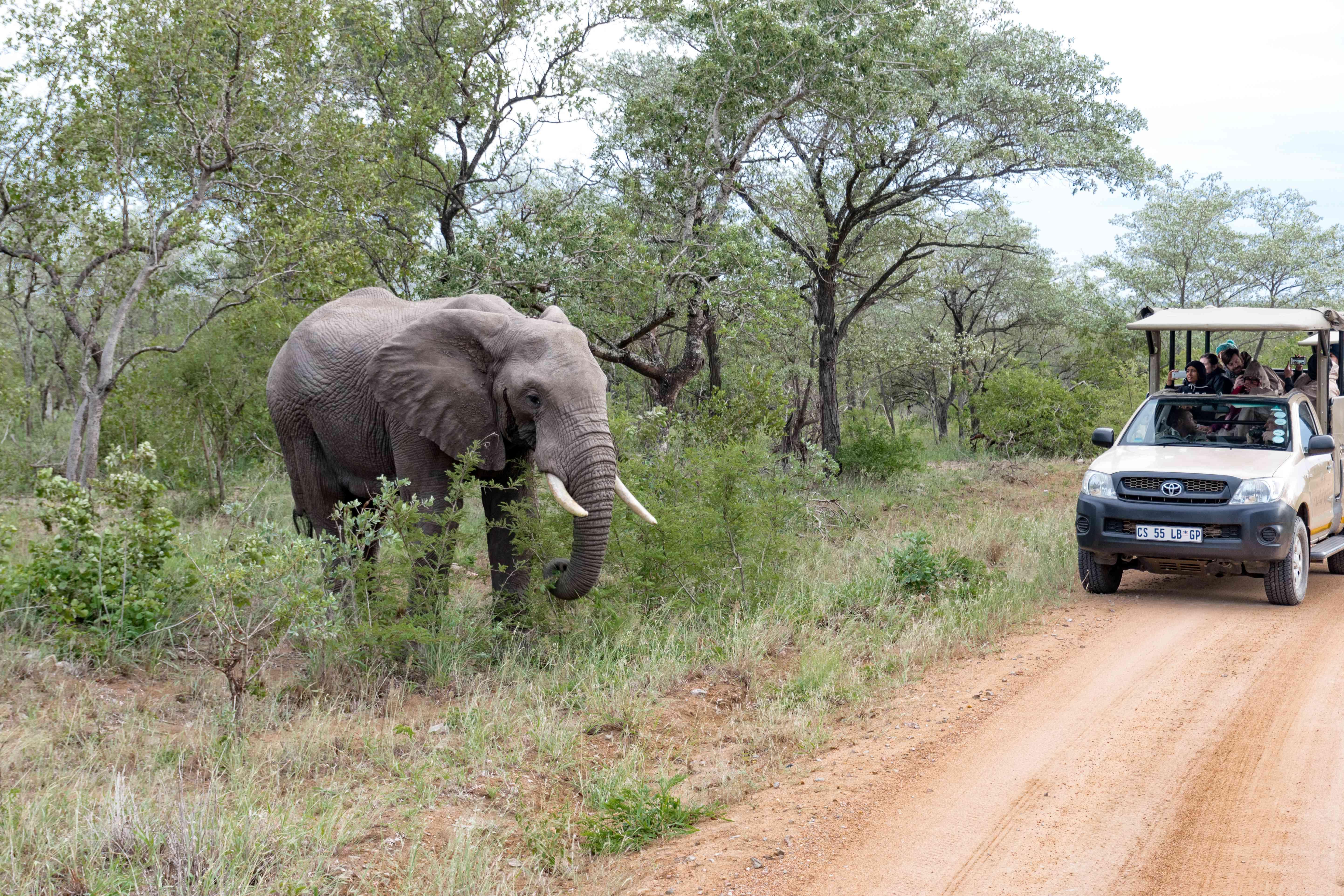 A tour group in Kruger National Park