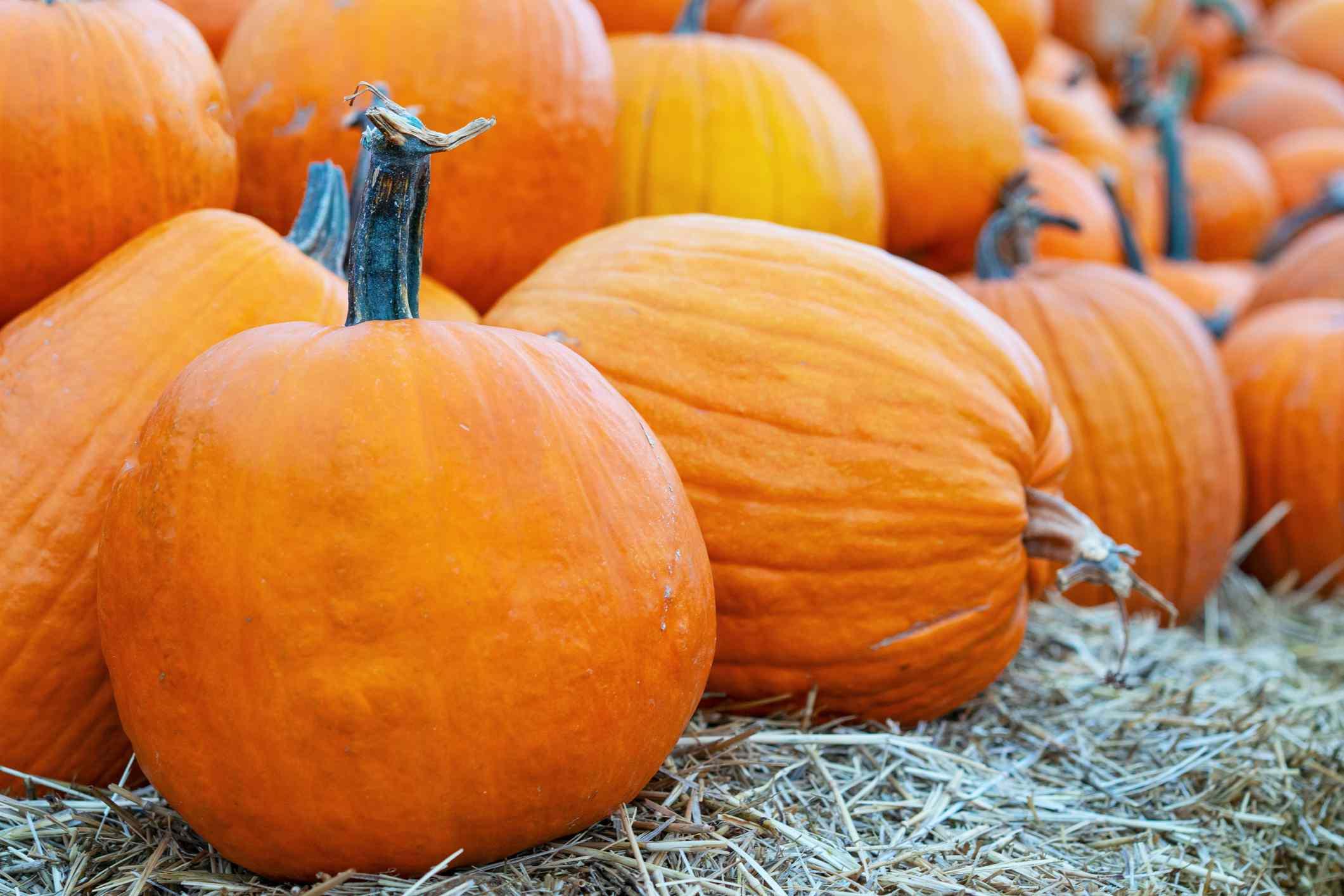 Freshly pile of orange pumpkins at outdoor Halloween local fair