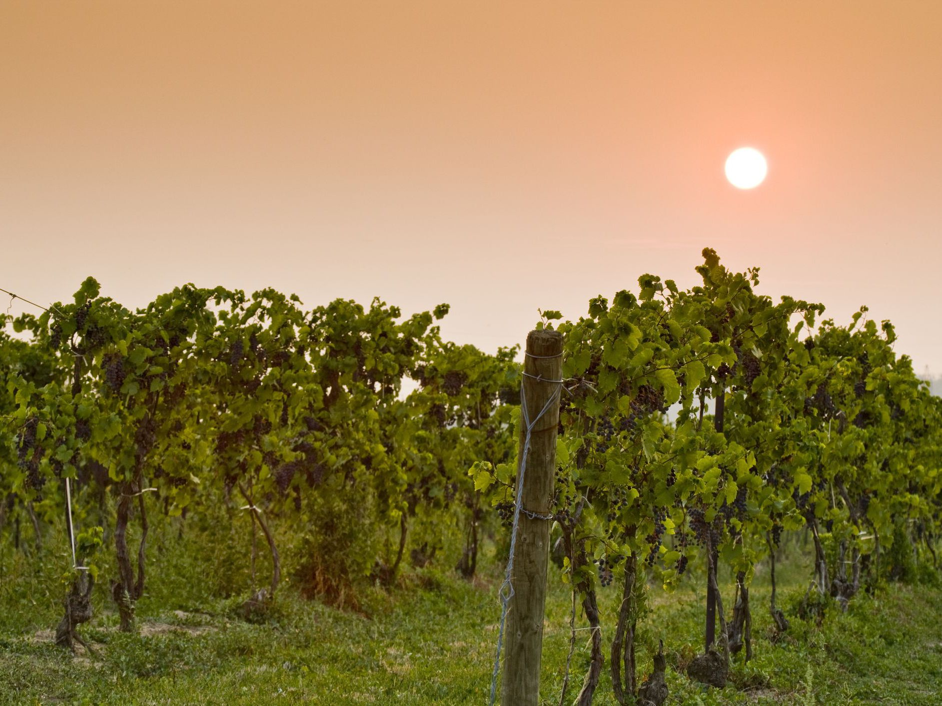 A Tour of New York State's Best Wineries