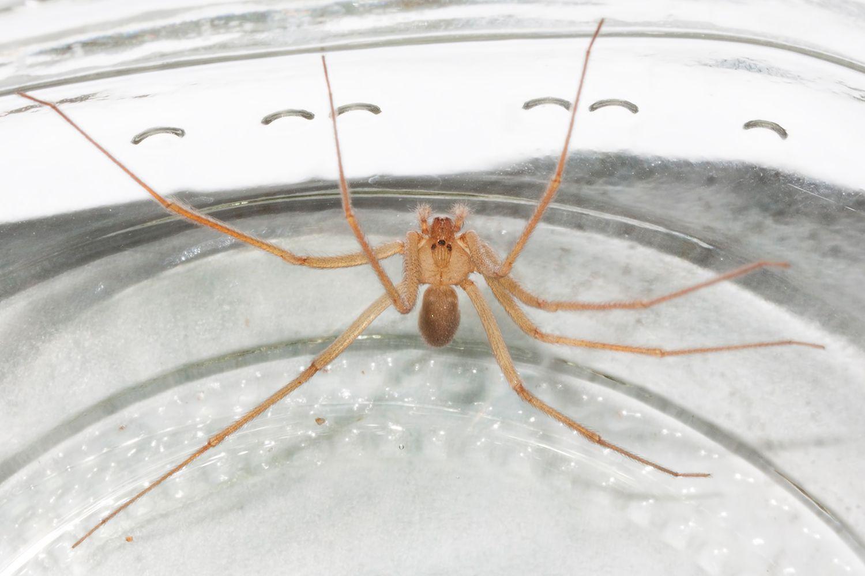 Utah's Dangerous Spiders
