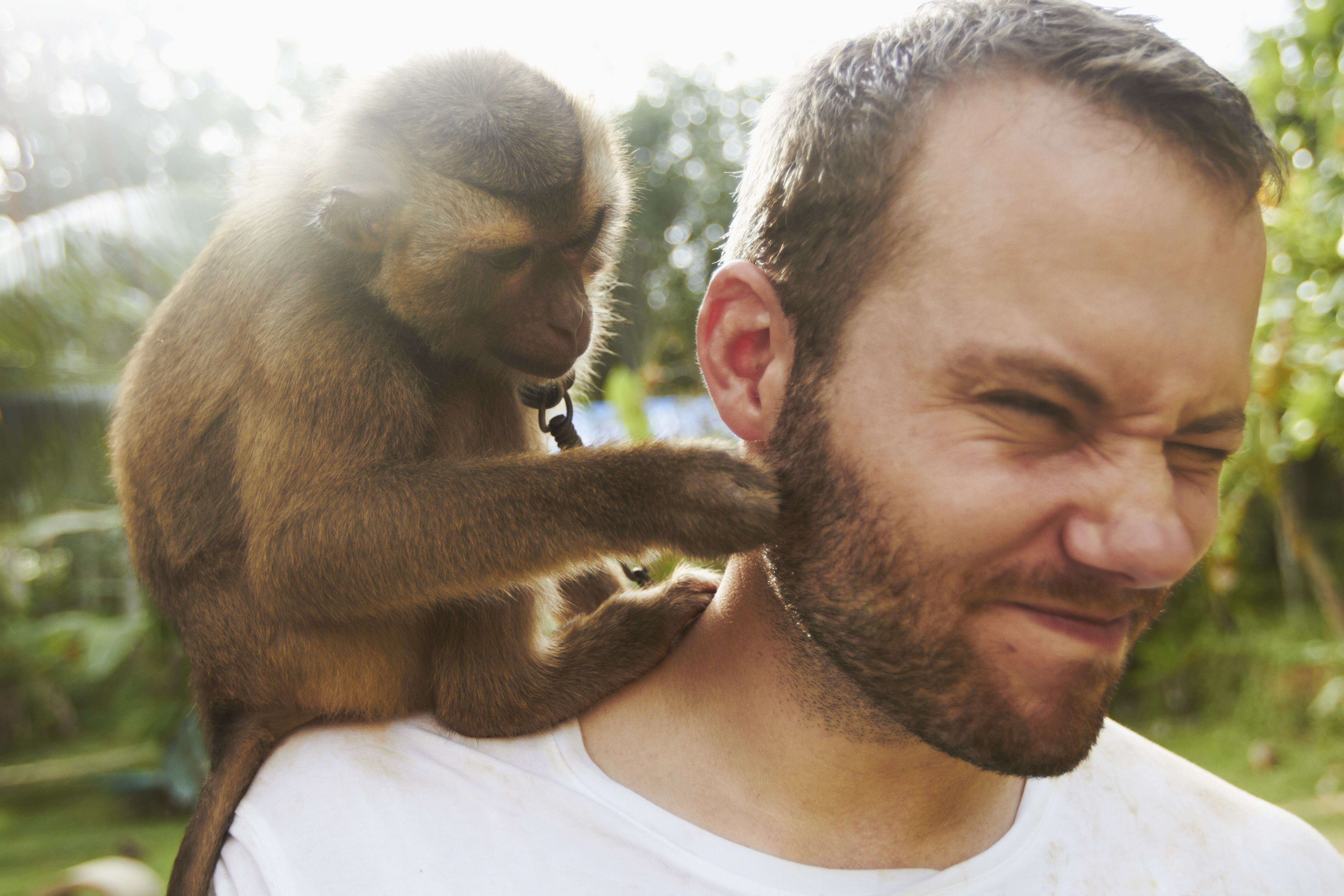 Farang tourist in Thailand with a monkey on his shoulder