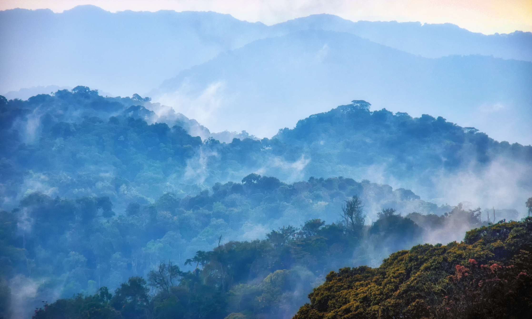 Aerial view of mists rising over Nyungwe Forest National Park