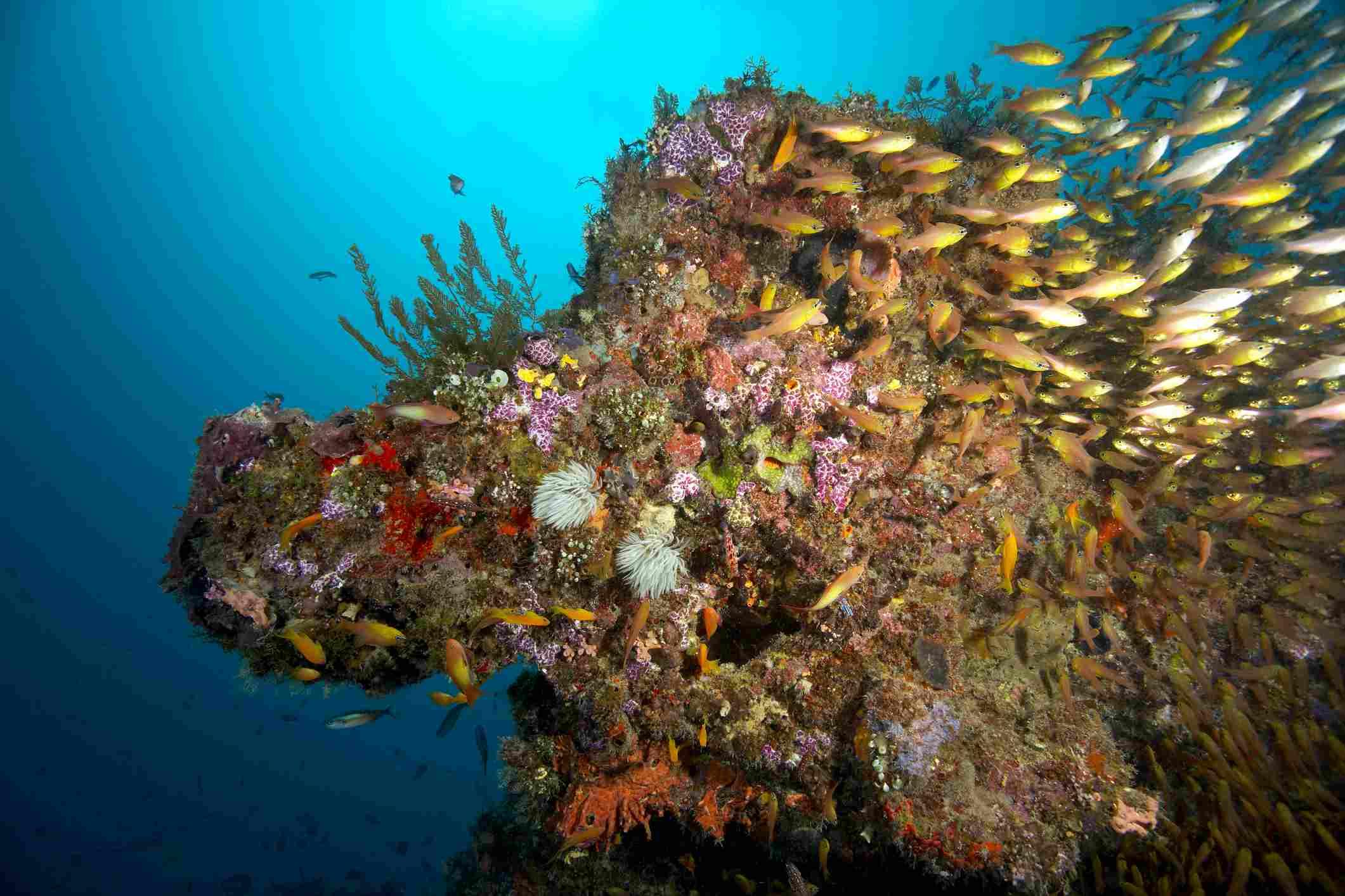 Zanzibar Reef, Tanzania