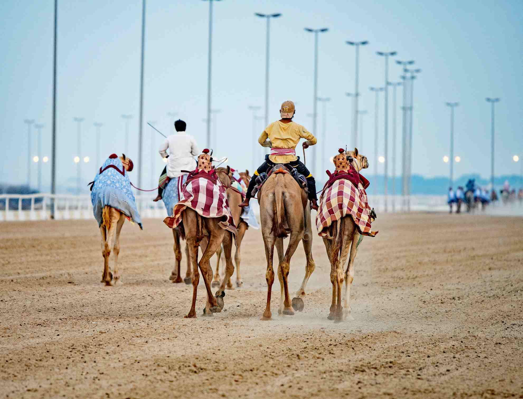 Camel Race Track in Qatar