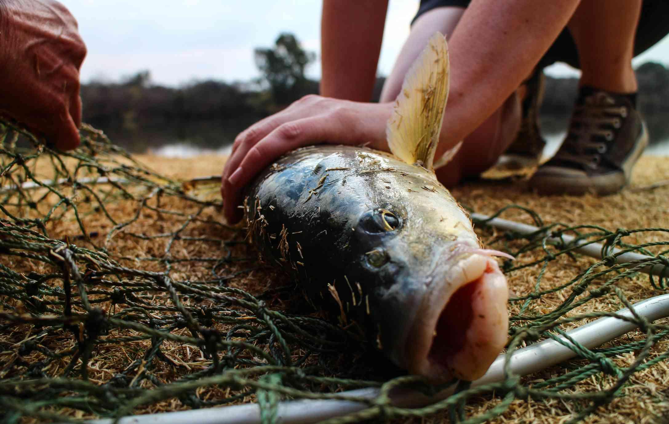 Pescando en el río Vaal, provincia del Noroeste