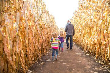 Corn maze in Seattle