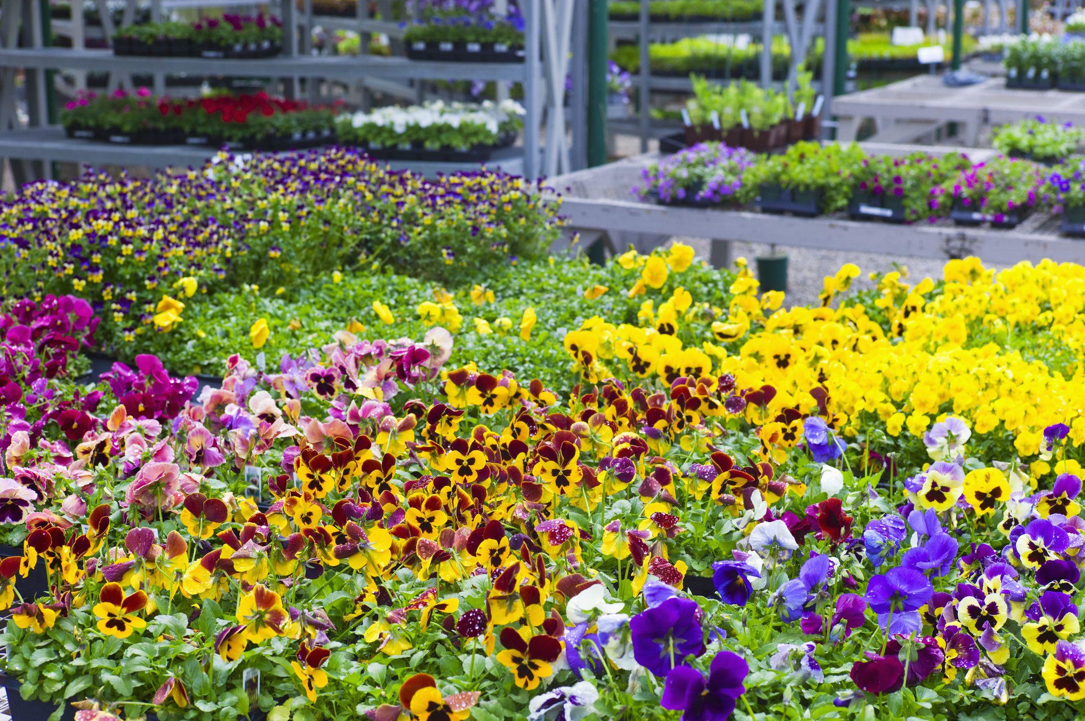 The Best San Diego Nurseries and Garden Centers