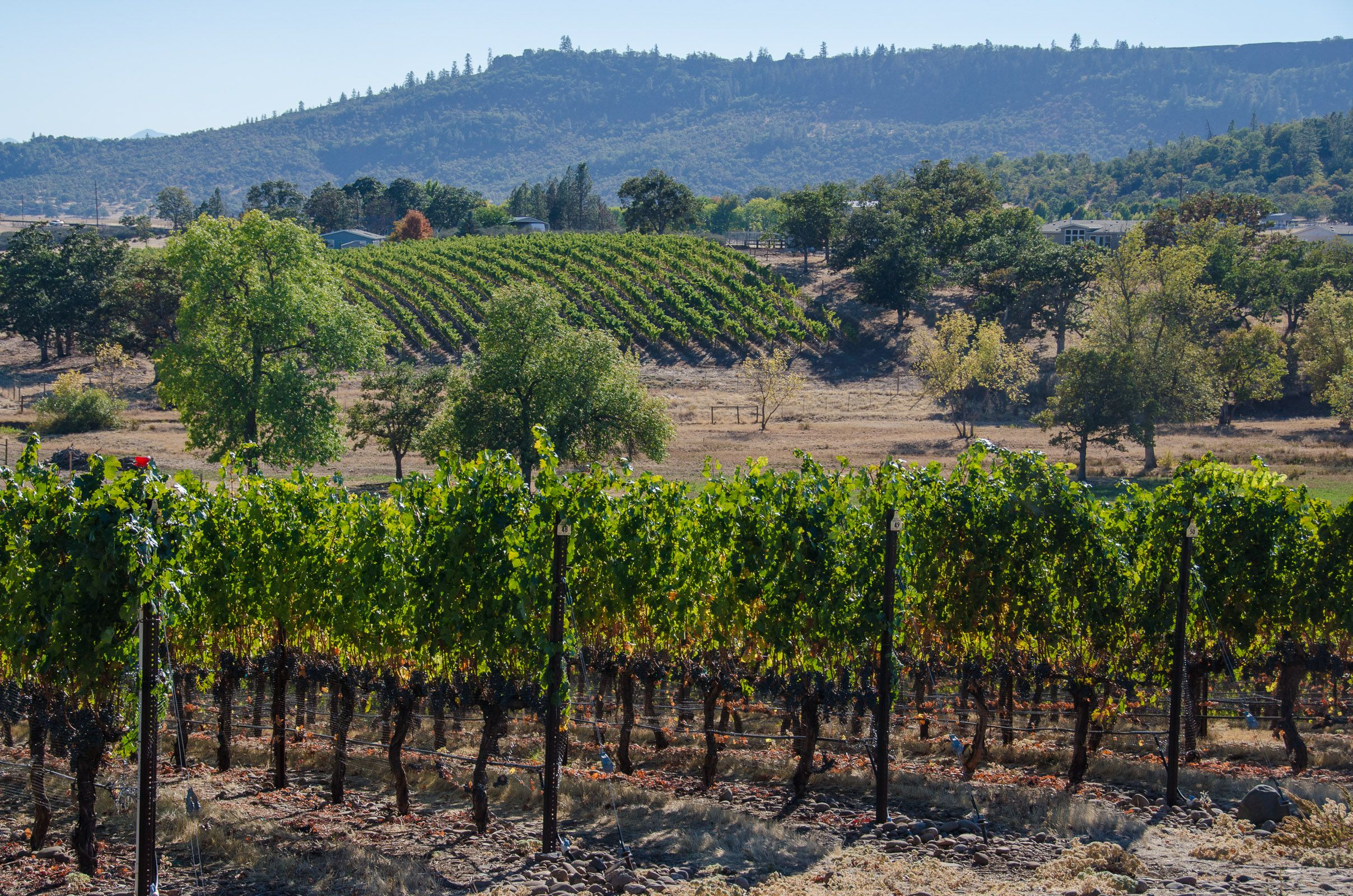 Vineyards on Table Rock, Oregon