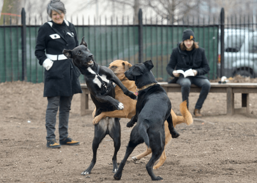 three dogs playing at McCarren Dog Run in Brooklyn